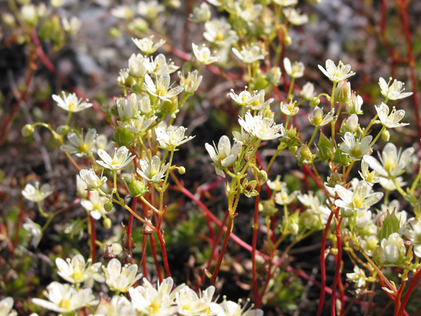 In summer, the tundra is covered with flowers.