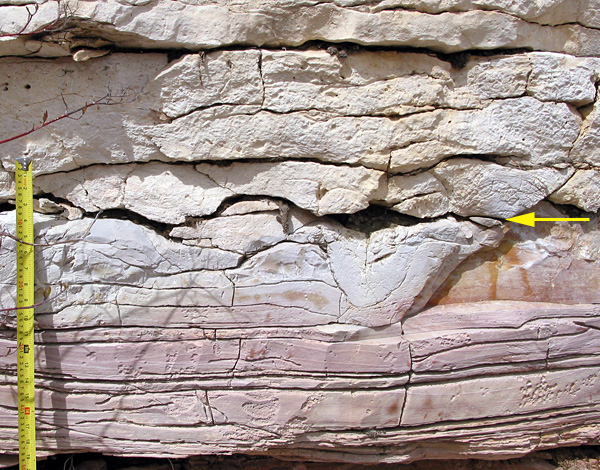 This is a vertical quarry face near Cormorant. The yellow arrow indicates the contact between the Ordovician Stony Mountain Formation (below) and the Stonewall Formation. This is a very irregular surface which is indented by channel-like features. It suggests a period during which sediment was not being deposited, and the surface may have been above sea level for a while.