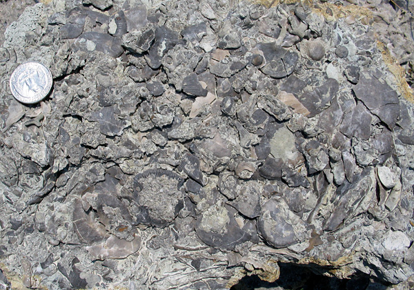 A mess of brachiopods on a Richmondian (Upper Ordovician) bedding plane surface
