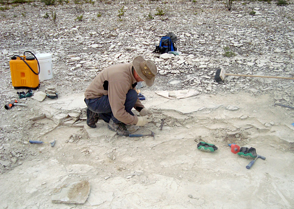 Searching for fossils, Sean Robson extracts a block of dolostone.