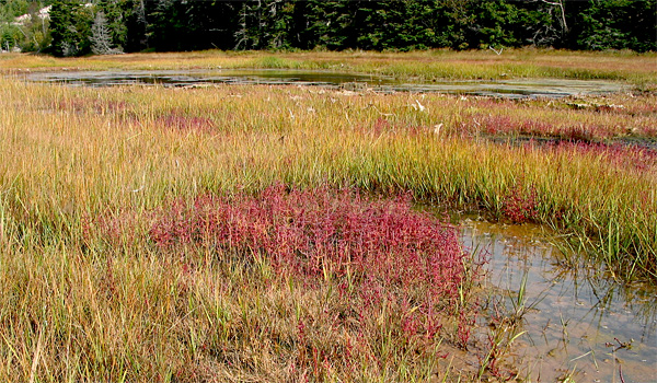 The salt marsh at Dipper Harbour, New Brunswick