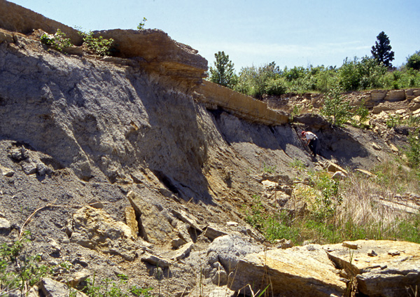 Near the north end of Hecla Island, the grey Winnipeg Formation is capped by hard dolostones of the Dog Head Member, Red River Formation. This photo was taken in the mid 1990s; I understand that this slope has slumped since then.