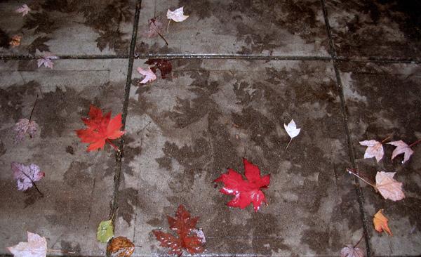 leaf_ghosts