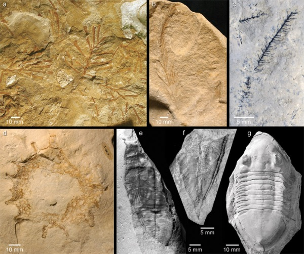 Cat Head fossils