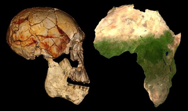 Homo rudolfensis, skull, Africa satellite