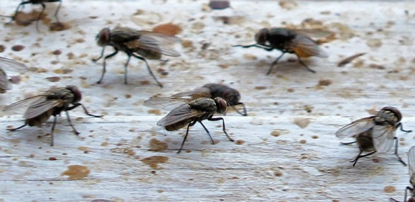 flies detail3