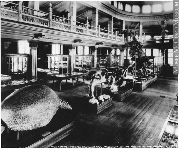 The Megatherium and Glyptodon at the Redpath Museum, Montreal, 1925