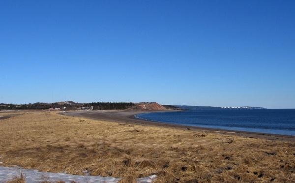 Vegetated beach ridge between the beach and the salt marsh