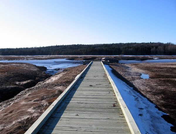 The salt marsh boardwalk