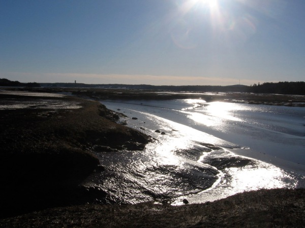 Manawagonish Creek in the salt marsh (note to my prairie friends: those shiny surfaces are mud, not ice!)