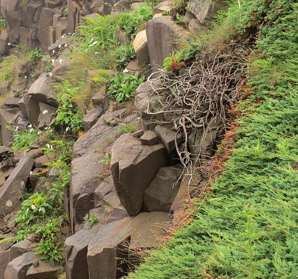 basalt roots