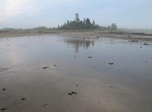 tidal flat 1