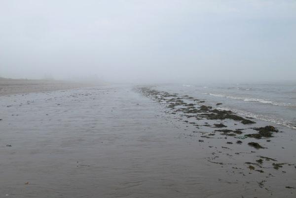 tidal flat 2