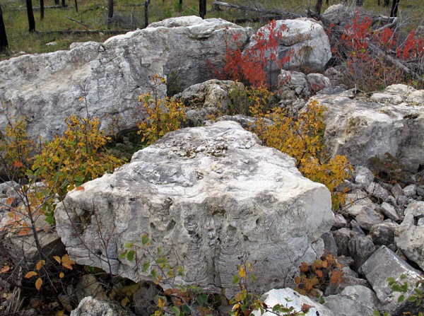 If you see stromatolites in central Manitoba, it is very likely that you are in Silurian rock!