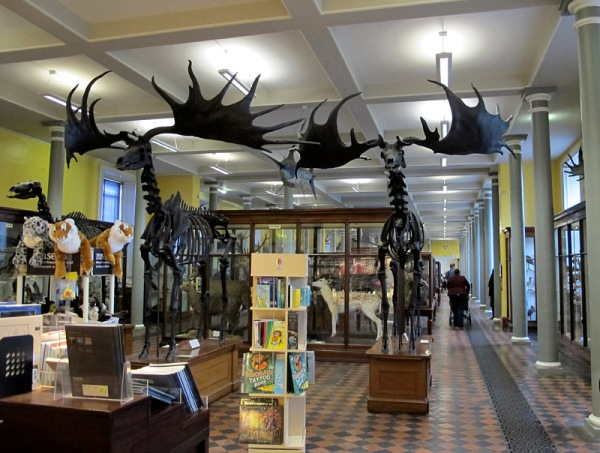 You enter past the shop and the pair of Irish elk.