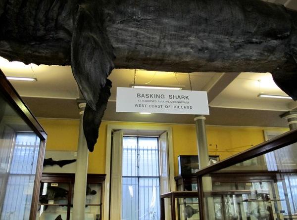 4basking shark