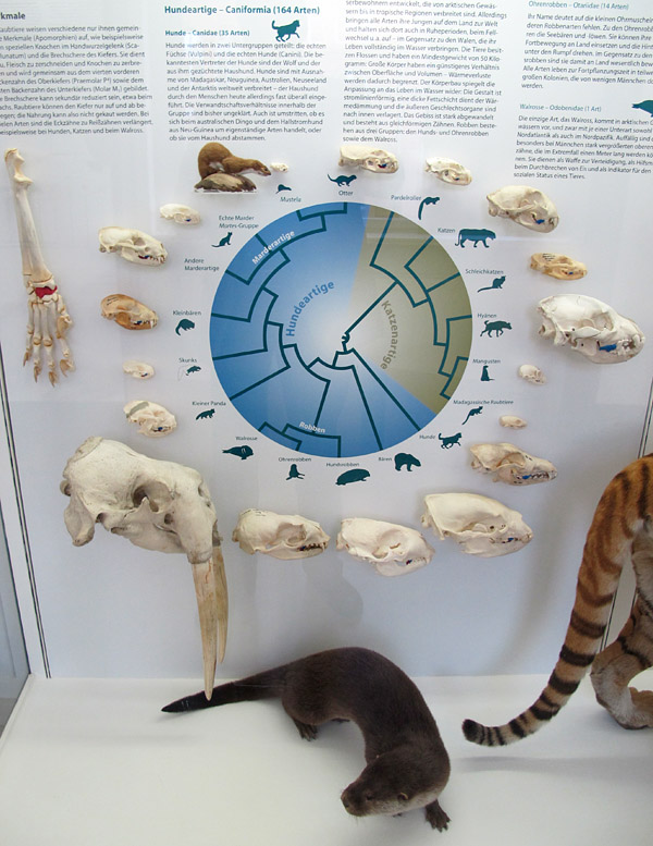E carnivores
