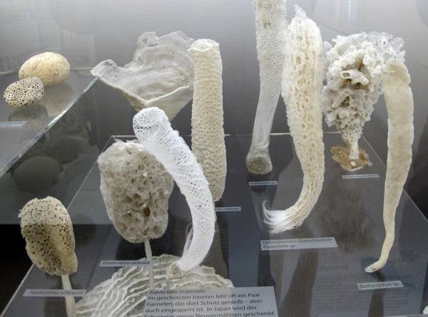 E sponges