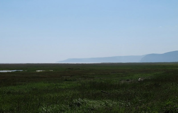 Salt marsh near Cape Enrage, New Brunswick