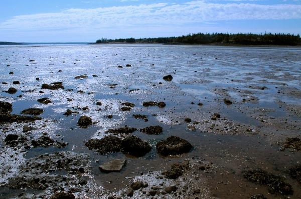Morning low tide at Pocologan, New Brunswick