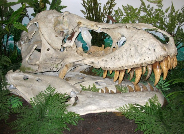 After the end Cretaceous extinction, small mammals scamper across the skull of a Tyrannosaurus rex. (diorama at the Canadian Museum of Nature, Ottawa)