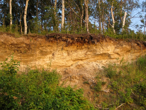 The freshly cut scarp reveals stratified sand