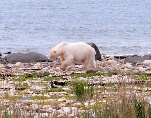 bear_shore