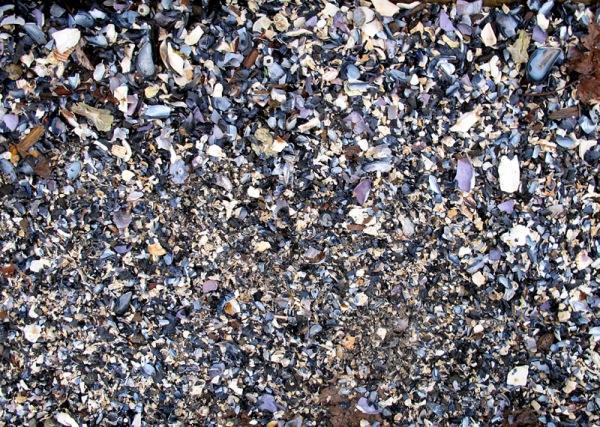 shell hash