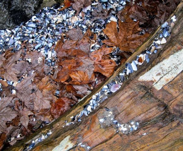 wood&leaves1
