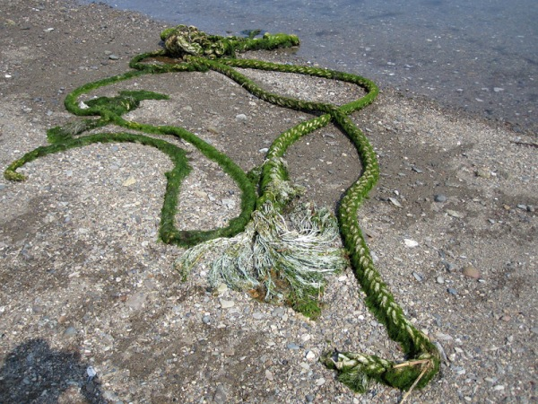 rope with algae