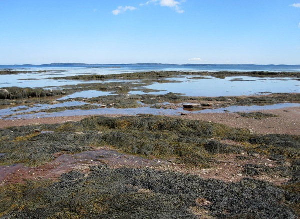 The Saint Andrews shore, with Deer Island on the horizon